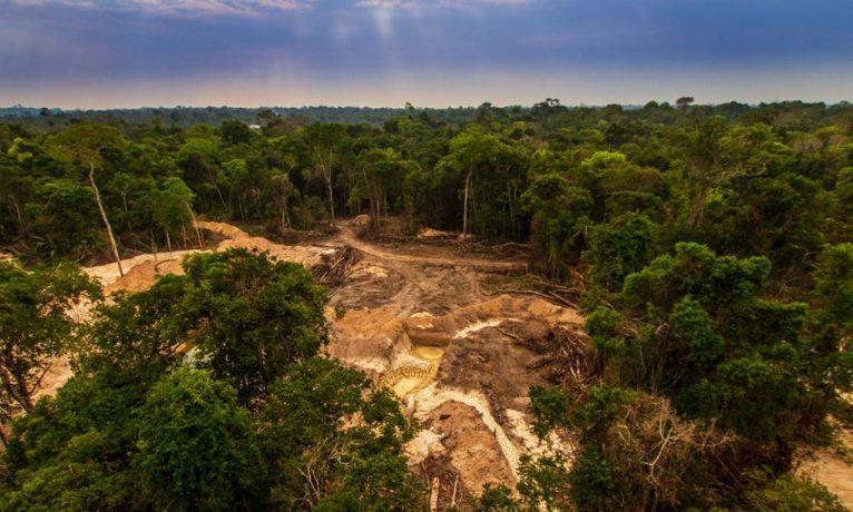 Amazon'da ormansızlaşma, son 10 yılın en yüksek seviyesini gördü